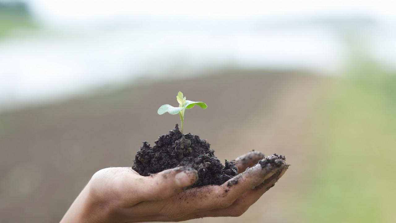 AGR child hand soil plant