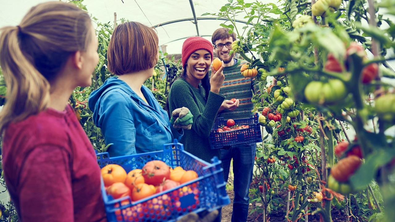 GEN GEN sustainability community gardening LoRes
